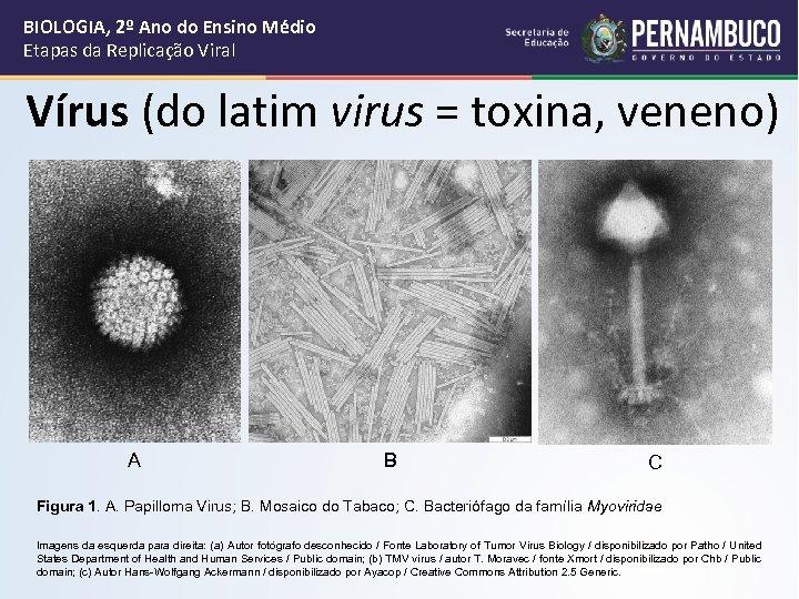 BIOLOGIA, 2º Ano do Ensino Médio Etapas da Replicação Viral Vírus (do latim virus