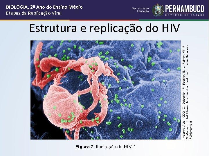 Imagem: Autor CDC/ C. Goldsmith, P. Feorino, E. L. Palmer, W. R. Mc. Manus
