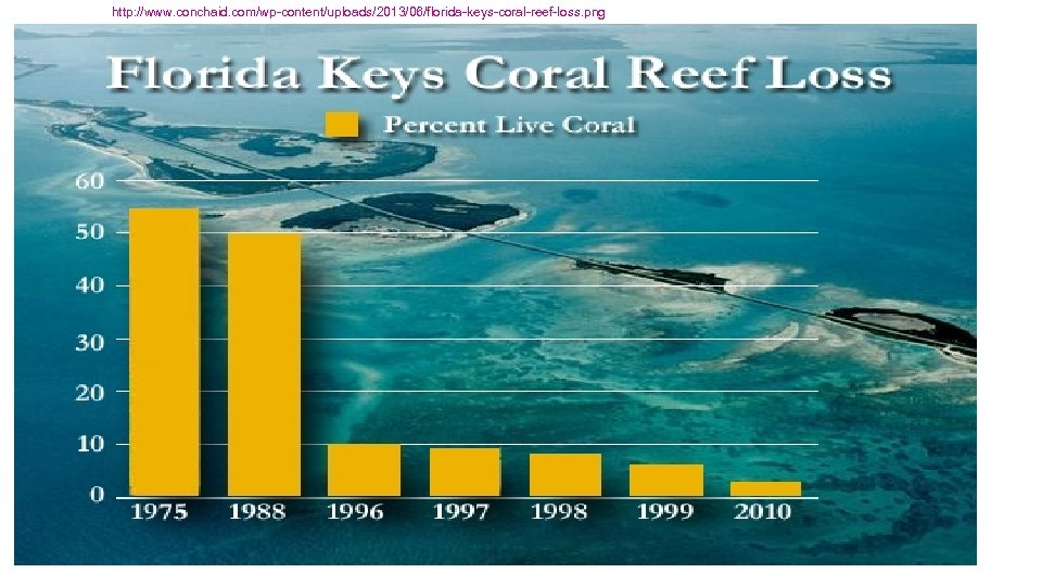 http: //www. conchaid. com/wp-content/uploads/2013/06/florida-keys-coral-reef-loss. png