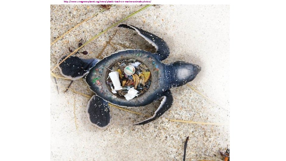 http: //www. onegreenplanet. org/news/plastic-trash-on-marine-animals-photos/