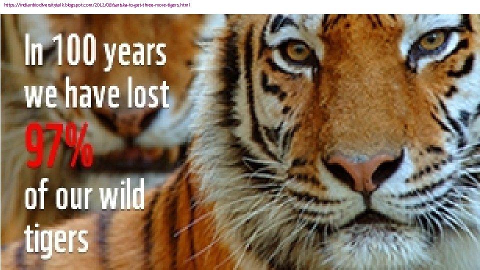 https: //indianbiodiversitytalk. blogspot. com/2012/08/sariska-to-get-three-more-tigers. html