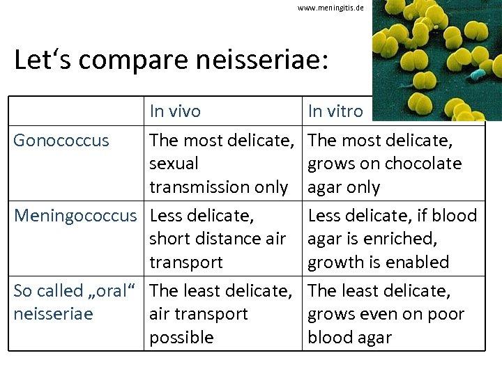 www. meningitis. de Let's compare neisseriae: In vivo Gonococcus The most delicate, sexual transmission
