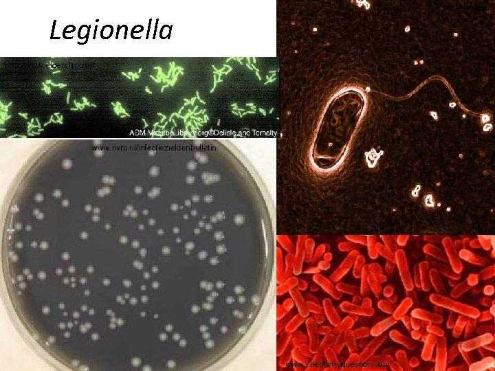 mcb. berkeley. edu Legionella http: //www. eldersllp. com www. rivm. nl/infectieziektenbulletin www. chemistryquestion. com