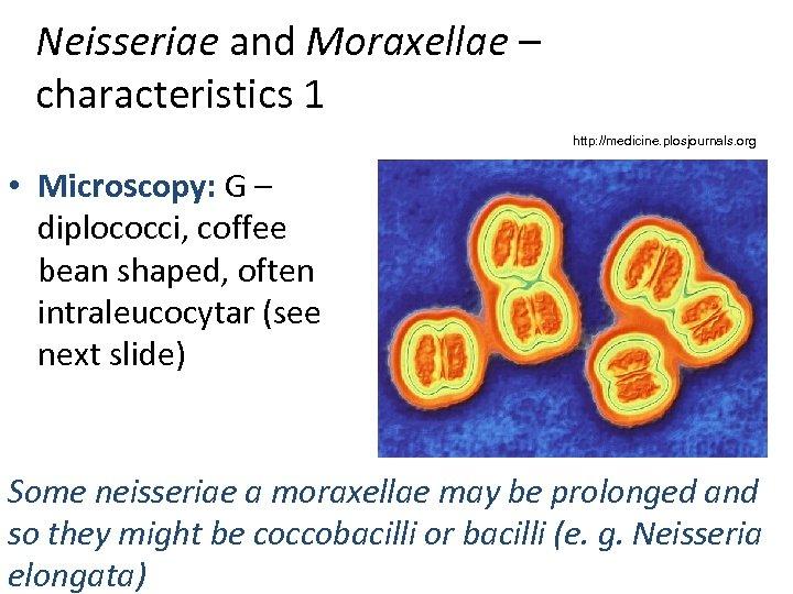 Neisseriae and Moraxellae – characteristics 1 http: //medicine. plosjournals. org • Microscopy: G –