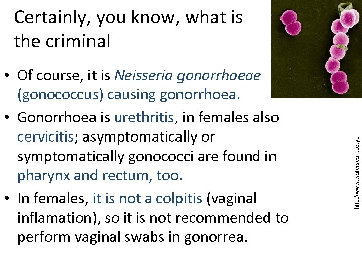 • Of course, it is Neisseria gonorrhoeae (gonococcus) causing gonorrhoea. • Gonorrhoea is