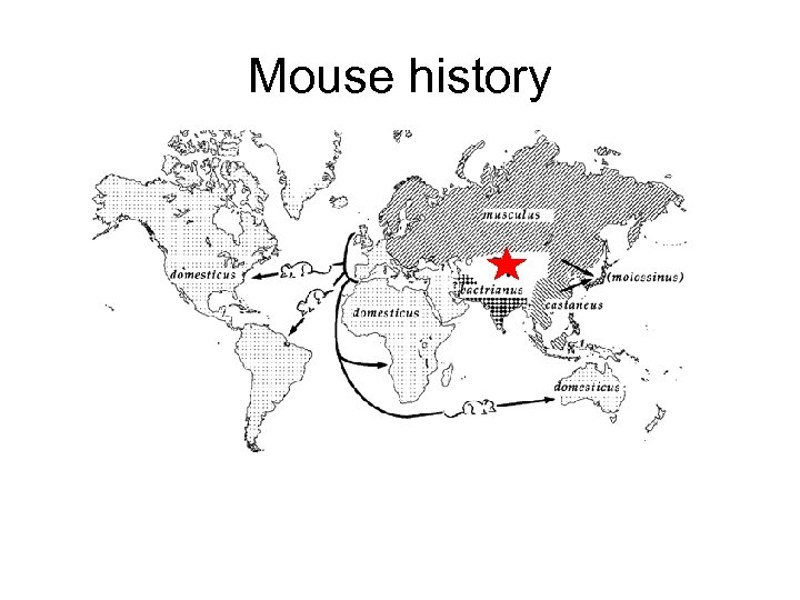 Mouse history