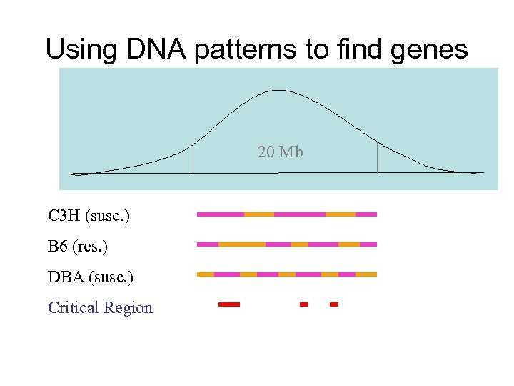Using DNA patterns to find genes 20 Mb C 3 H (susc. ) B