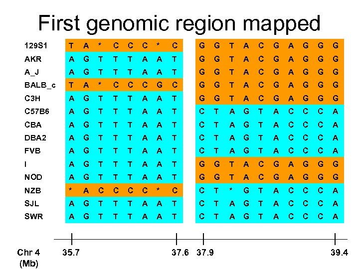First genomic region mapped 129 S 1 T A * C C C *