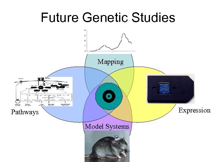 Future Genetic Studies Mapping Expression Pathways Model Systems