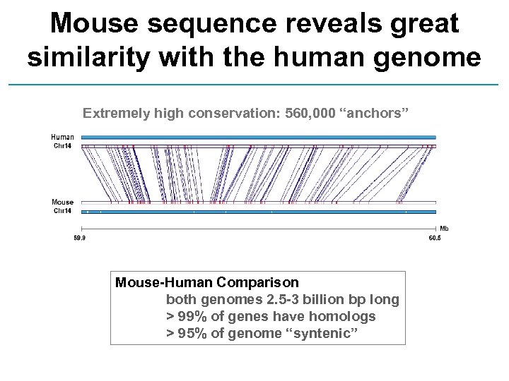 Mouse sequence reveals great similarity with the human genome Extremely high conservation: 560, 000
