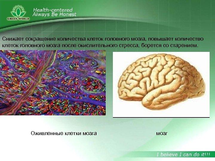 Снижает сокращение количества клеток головного мозга, повышает количество клеток головного мозга после окислительного стресса,
