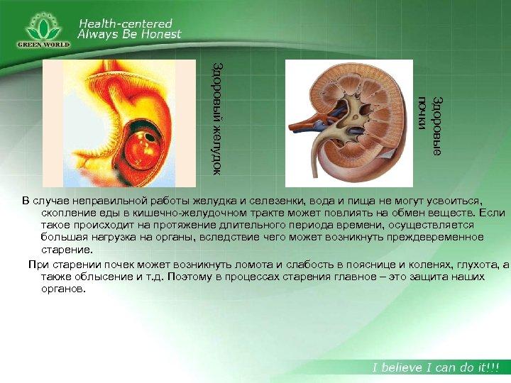 Здоровые почки Здоровый желудок В случае неправильной работы желудка и селезенки, вода и пища