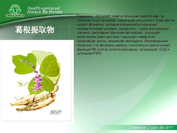 葛根提取物 Пуэрария обладает замечательными свойствами, за границей еще называют «азиатский женьшень» . В ее