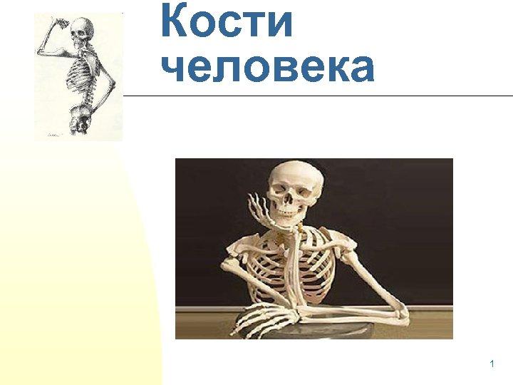 Кости человека Давайте знакомиться! 1