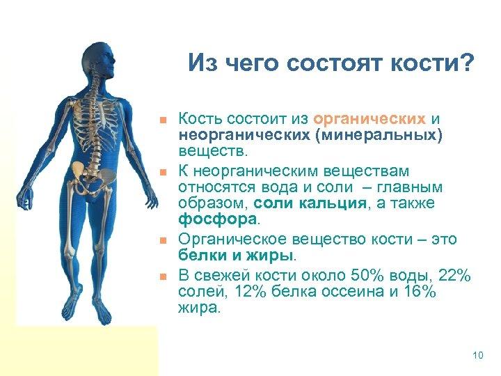 Из чего состоят кости? n n Кость состоит из органических и неорганических (минеральных) веществ.