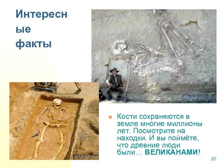 Интересн ые факты n Кости сохраняются в земле многие миллионы лет. Посмотрите на находки.