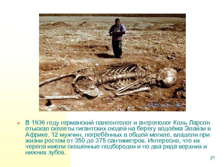 n В 1936 году германский палеонтолог и антрополог Коль Ларсон отыскал скелеты гигантских людей