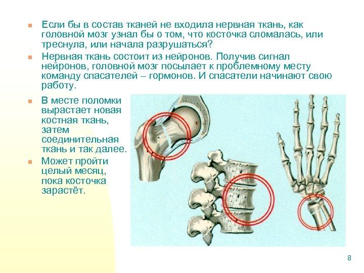 n n Если бы в состав тканей не входила нервная ткань, как головной мозг