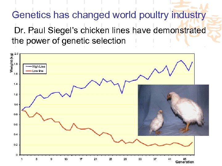 Genetics has changed world poultry industry Dr. Paul Siegel's chicken lines have demonstrated the
