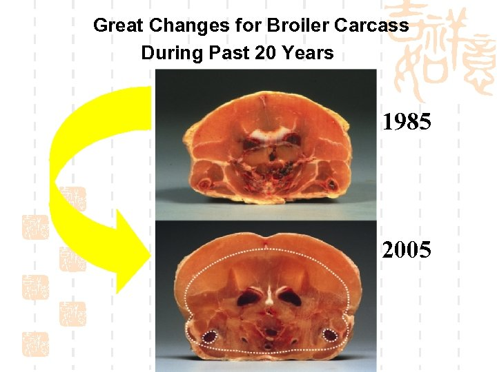 Great Changes for Broiler Carcass During Past 20 Years 1985 2005