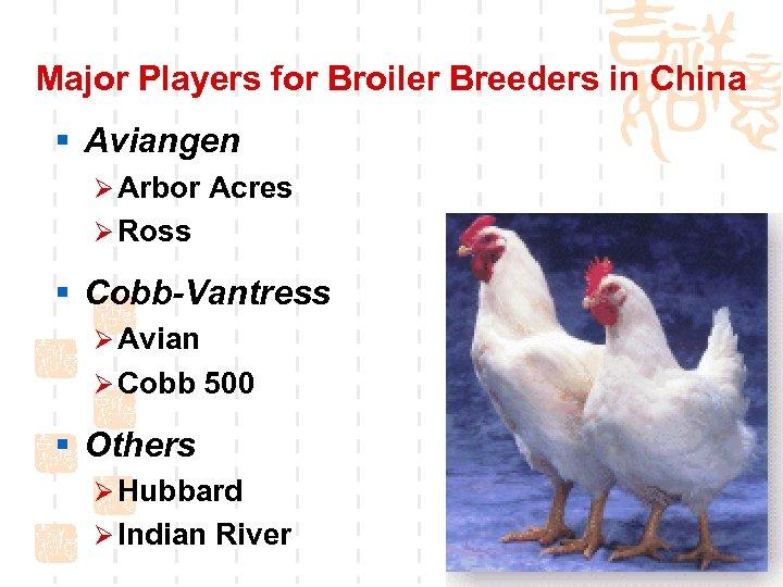 Major Players for Broiler Breeders in China § Aviangen Ø Arbor Acres Ø Ross