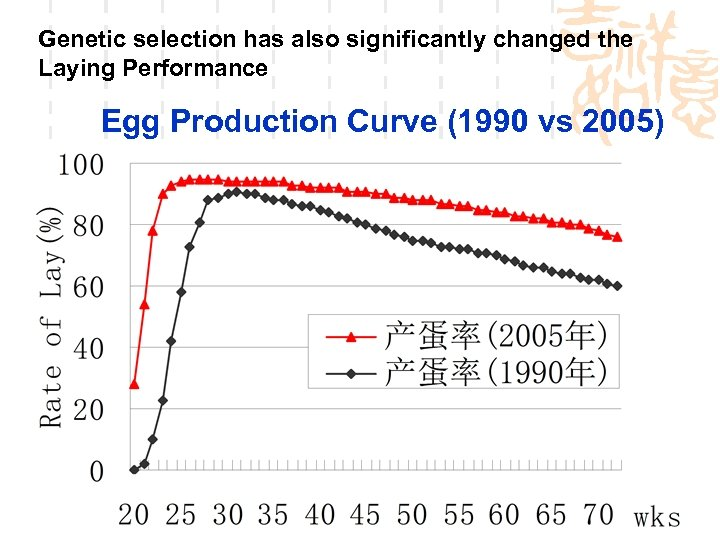 Genetic selection has also significantly changed the Laying Performance Egg Production Curve (1990 vs