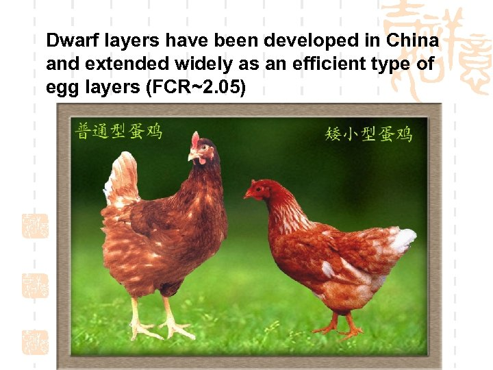Dwarf layers have been developed in China and extended widely as an efficient type