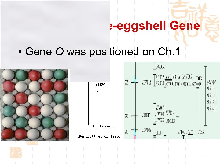 Hunting for Blue-eggshell Gene • Gene O was positioned on Ch. 1
