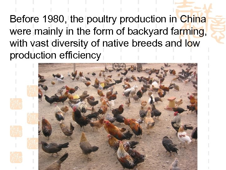 Before 1980, the poultry production in China were mainly in the form of backyard