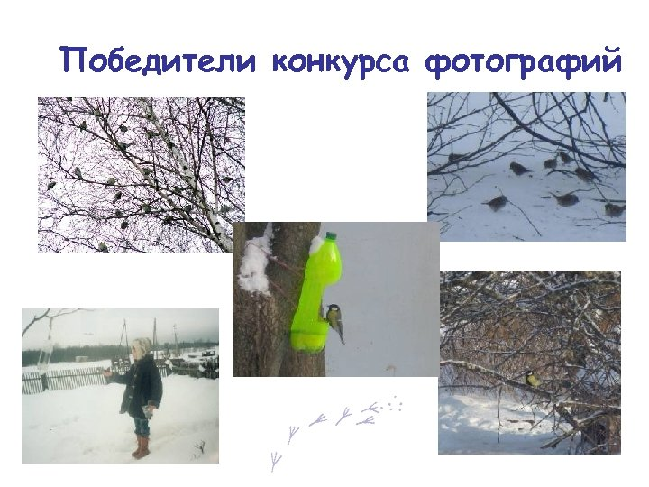 Победители конкурса фотографий