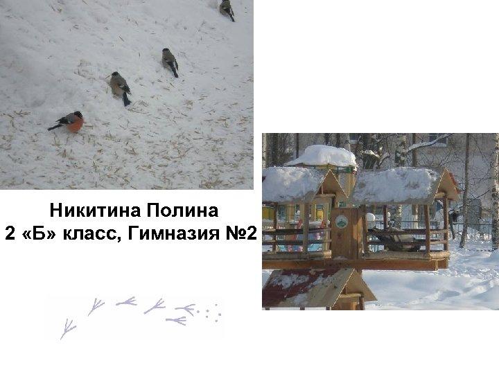 Никитина Полина 2 «Б» класс, Гимназия № 2