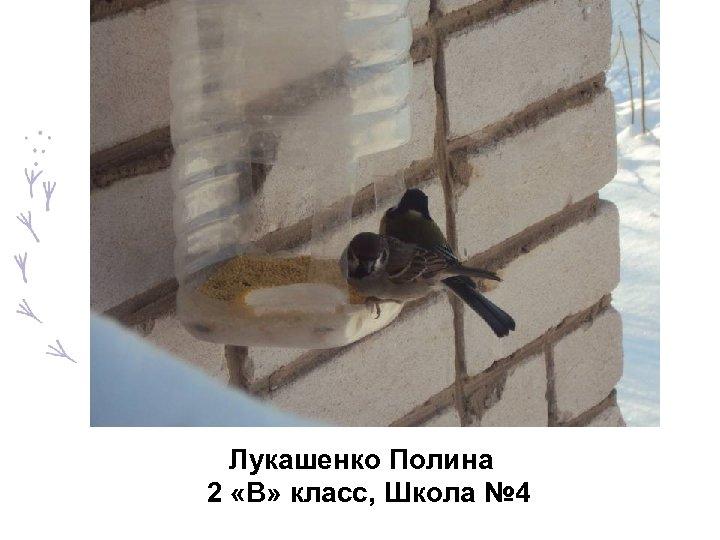 Лукашенко Полина 2 «В» класс, Школа № 4