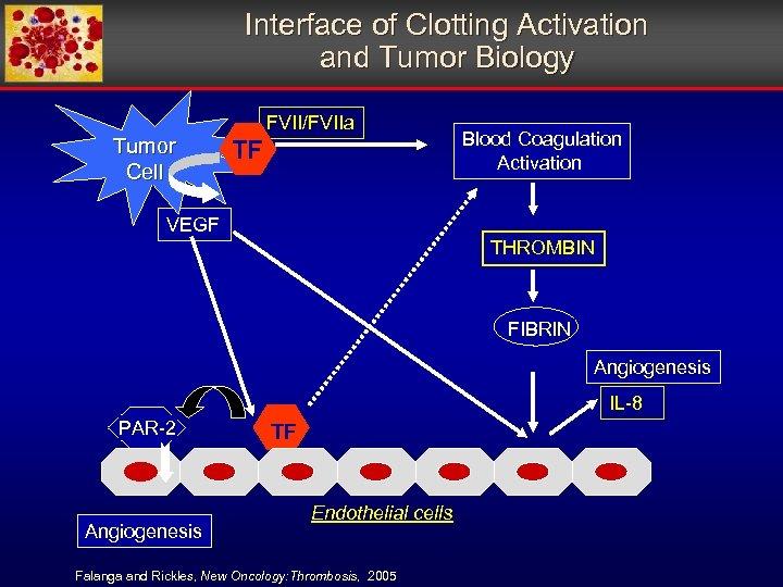 Interface of Clotting Activation and Tumor Biology Tumor Cell FVII/FVIIa TF Blood Coagulation Activation