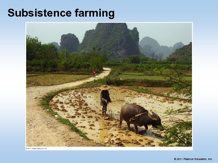 Subsistence farming © 2011 Pearson Education, Inc.