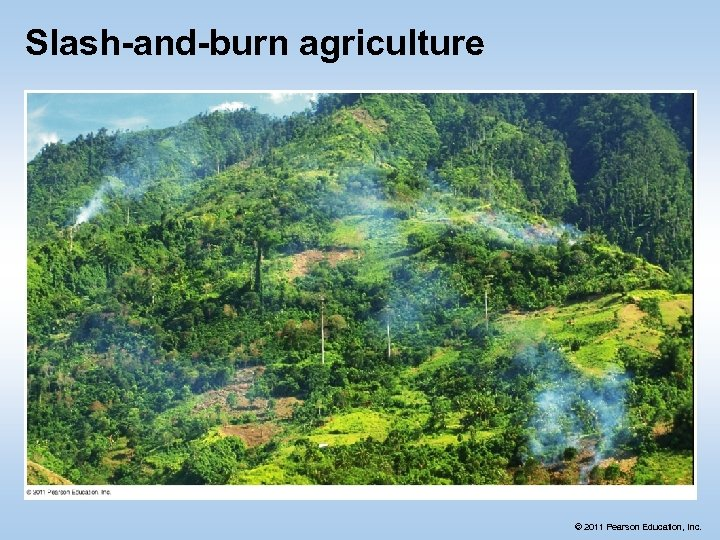 Slash-and-burn agriculture © 2011 Pearson Education, Inc.
