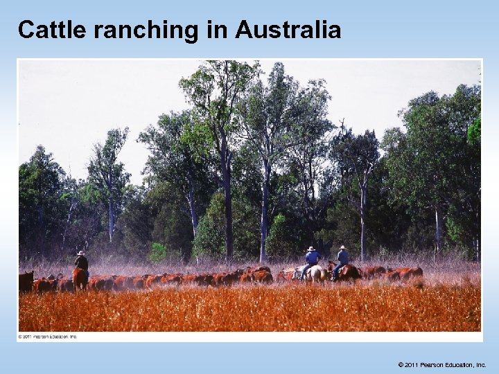 Cattle ranching in Australia © 2011 Pearson Education, Inc.