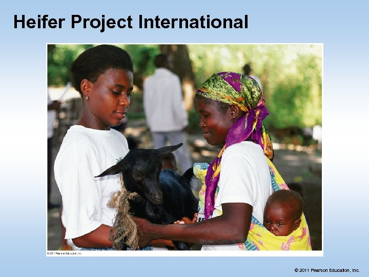 Heifer Project International © 2011 Pearson Education, Inc.