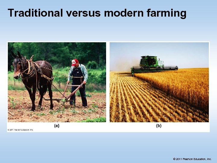 Traditional versus modern farming © 2011 Pearson Education, Inc.