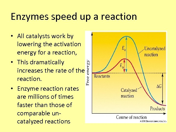 Enzymes speed up a reaction • All catalysts work by lowering the activation energy