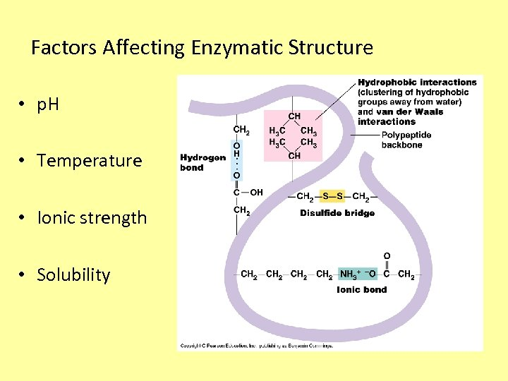 Factors Affecting Enzymatic Structure • p. H • Temperature • Ionic strength • Solubility