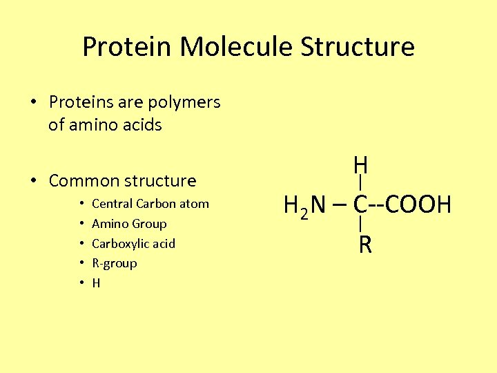 Protein Molecule Structure • Proteins are polymers of amino acids • Common structure •