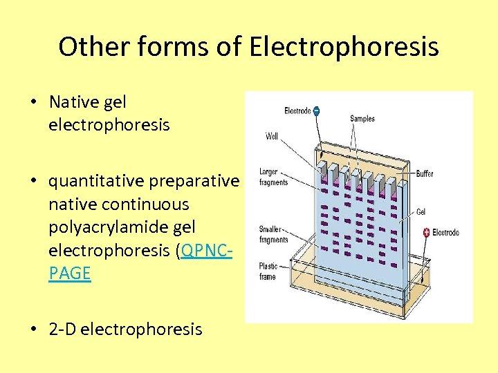 Other forms of Electrophoresis • Native gel electrophoresis • quantitative preparative native continuous polyacrylamide