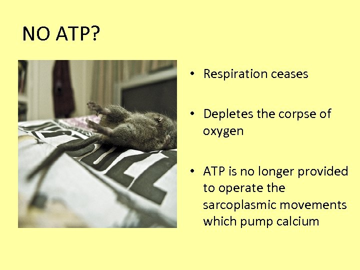 NO ATP? • Respiration ceases • Depletes the corpse of oxygen • ATP is