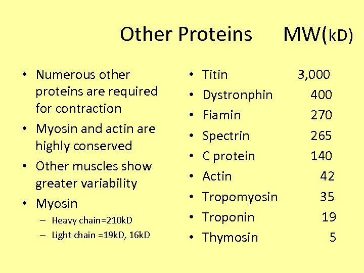 Other Proteins MW(k. D) • Numerous other proteins are required for contraction •