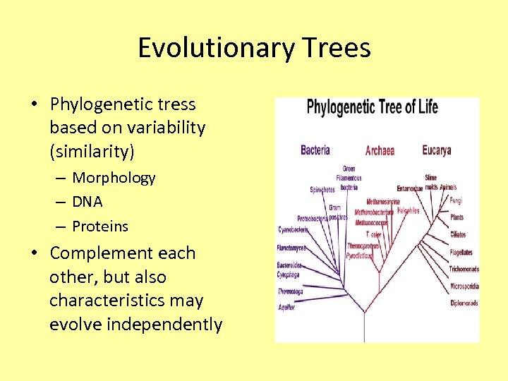 Evolutionary Trees • Phylogenetic tress based on variability (similarity) – Morphology – DNA –