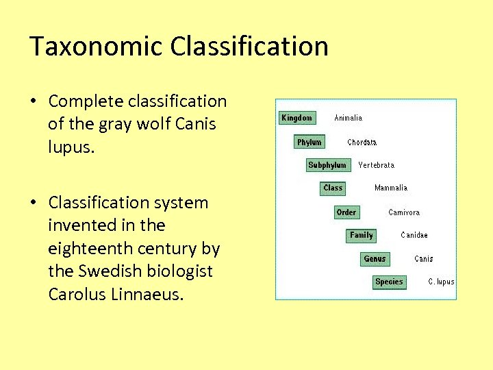 Taxonomic Classification • Complete classification of the gray wolf Canis lupus. • Classification system