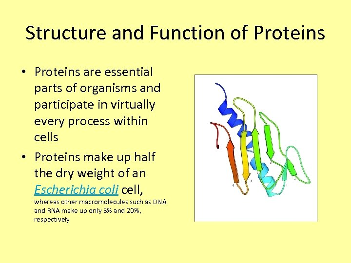 Structure and Function of Proteins • Proteins are essential parts of organisms and participate