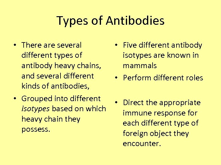 Types of Antibodies • There are several different types of antibody heavy chains, and