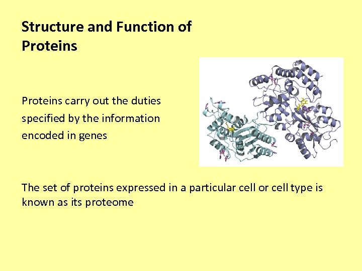 Structure and Function of Proteins carry out the duties specified by the information encoded