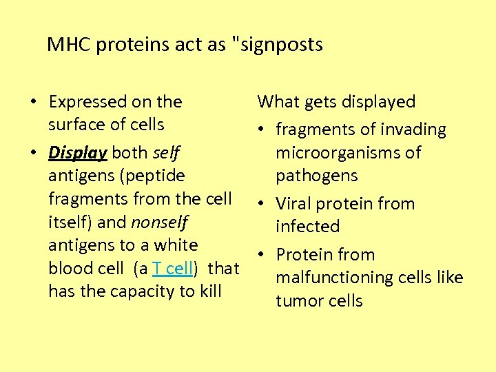 MHC proteins act as